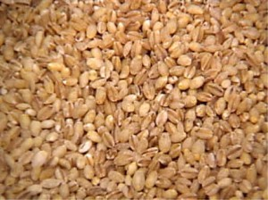 Food Barley