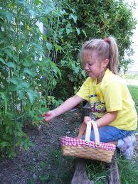 SG - Harvesting Vegetables